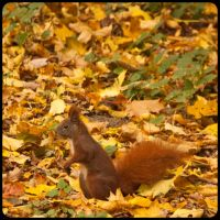 Tiergarten Squirrel by exosquelette