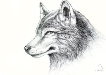 Wolf Sketch by RedPear