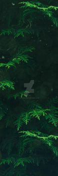 Green Pine Trees Forest - Custom Background by Ulfeid3