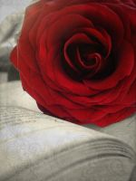 Read with rose by Eluany