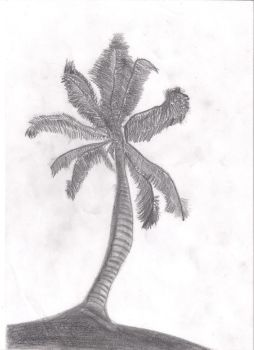 palm tree by poppin4bre973