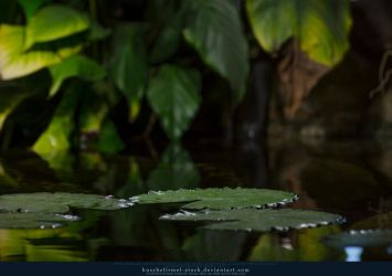 Lilly Leaves 05 by kuschelirmel-stock