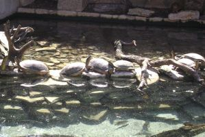 San antonio zoo picture 28 by Inya-spring