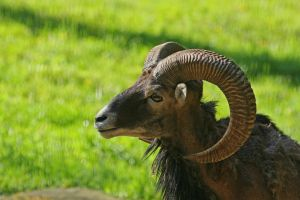 Curved Horns 8136214 by StockProject1