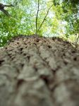 Squirrel's eye View by intouch