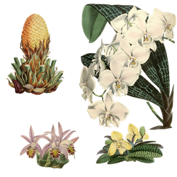 Variety of 1800's Flowers 5 PNG by chaseandlinda