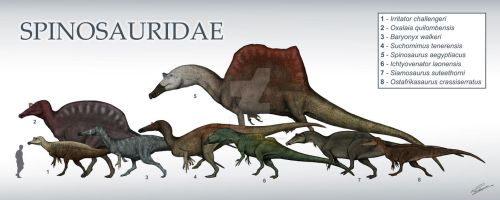 Spinosauridae size chart by DefinetilyNotPedro