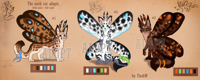 The cat moth adopts (Fixed price) by FlashW