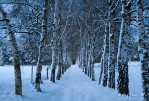 winter avenue by paulchen11