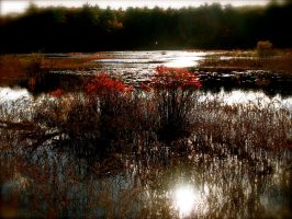 Sun On Cranberry Bog by MrsEmmettCullen508