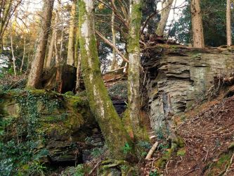 tree and rock landscape fillers by nonyeB