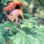 Little Red Thing by Aprillka