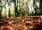 ...AuTumN... by Anotheroutsider