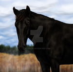 Commission - Old Black Mare by Vizseryn