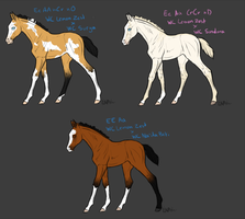 WC Lemon Zest - First Foal Crop *Sale* by lmnoporcher