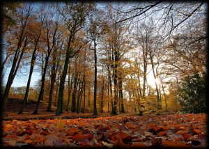 Autumn HDR by pagan-live-style
