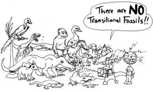 No Transitional Fossils by Domain-of-Darwin