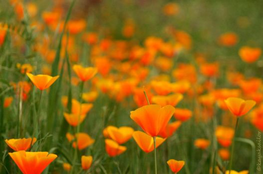 color of spring by kayaksailor