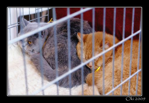 Cats' exhibition 06 by Oki666