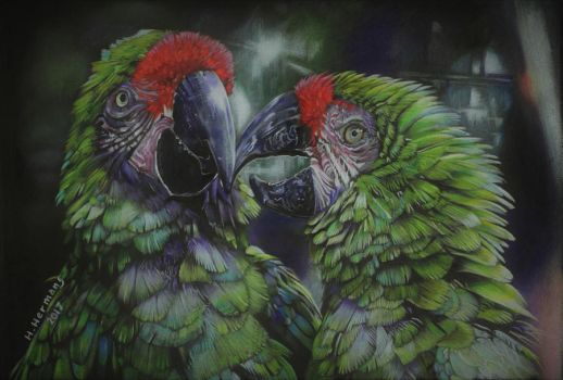 Great green macaw by HendrikHermans