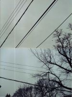 trees and telephone wires by 62bda02