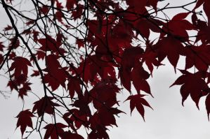 Leaves of Red 3: 2012 by insanity-pillz