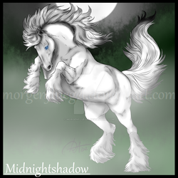 SSO: Midnightshadow by Morgenfluegel