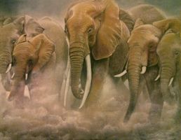 Elephants  - pastels -  A3 paper by Helsartpage