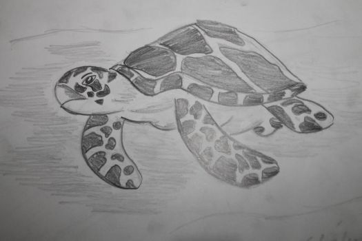 Sea Turtle by kahlil-ARTist