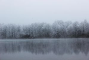 Foggy Lakeshore by Caillean-Photography