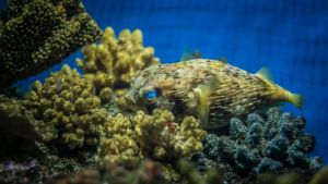 Cool Fish by whitephotographySCOT