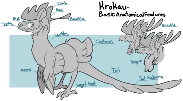 Krokau - Basic Anatomical Features by PudgeHen