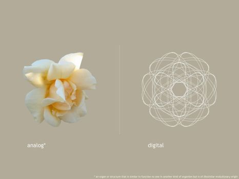 Flower - Analog vs Digital 2 by dedavai