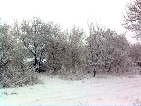 Snow-covered trees 1 by ZoRRoArk