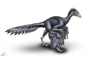 Archaeopteryx lithographica by MALvit