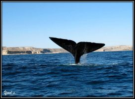 Whale's tail by yaelse