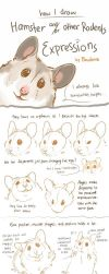 Hamster / Rodent Expression tutorial by Pawlove-Arts