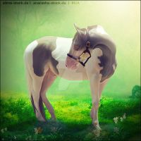 Dottie Trade Hee by VIP-EquineArt