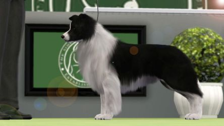 Sims 3 Border Collie - Rayon at the Premier Show by SpirityTheDragon