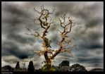 Lightning Tree by Megglles