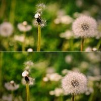 flowers 2 by Northern-beauty