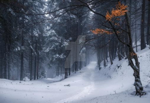 Winter forest on the way to Petros by naumenkophotographer