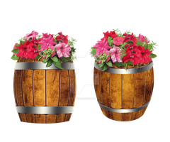 Casks with Petunia flowers stock by IgnisFatuusII