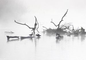 Island of Birds by Caillean-Photography