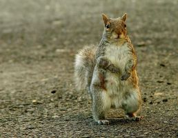 Squirrel on his Haunches by shutterbabe2006