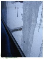 2010 15 02 Snow Pictures 04 by lilly-peacecraft
