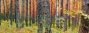 taints of forest by marrciano