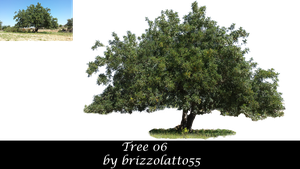 Tree 06 by Brizzolatto55