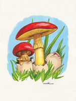 Mushrooms by jilub