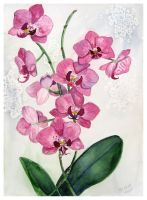 Orchid by solgas